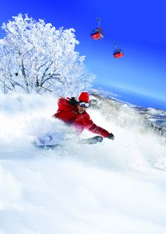 Sapporo Kokusai Skiing Resort in Japan. Check out the top skiing resorts in Japan at TheCultureTrip.com.Click on the image to view the full list! (http://www.skijapan.cn/g/gallery/gallery02.html) - www.AsianSkincare.Rocks