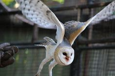 Umgeni River Bird Park: New Show Birds New Shows, Owl, Birds, Park, Training, Animals, River, Animales, Animaux