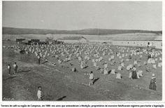 Terreiro de café na região de Campinas, em 1888: nos anos que antecederam a Abolição, proprietários de escravos falsificavam registros para burlar a legislação http://www.unicamp.br/unicamp/ju/638/o-canto-do-cisne-da-escravidao