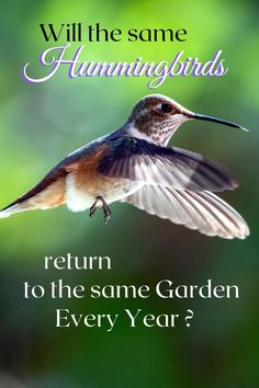 Given the right conditions, hummingbirds will return to the same garden every year! Follow these tips to create a Hummingbird haven Every Year, Hummingbird, Garden, Garten, Lawn And Garden, Hummingbirds, Gardening, Outdoor, Gardens