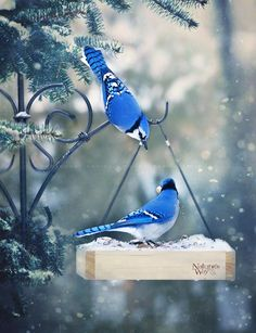 Colorful bird nature sweets 56 New ideas Pretty Birds, Love Birds, Beautiful Birds, Animals Beautiful, Beautiful Pictures, Exotic Birds, Colorful Birds, Animals And Pets, Cute Animals