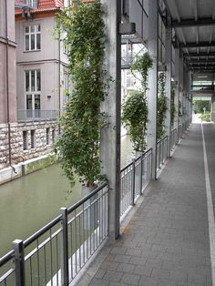 Drahtseile aus Edelstahl zur Fassadenbegrünung Climbers, Concrete Wall, Wire, Stainless Steel