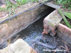 Trại lợn gây ô nhiễm môi trường nghiêm trọng