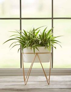 Browse refined roses, eye-catching succulents and lush orchs in our house plants range. Find garden plants in wicker pots and rustic baskets at M&S Garden Plants, Indoor Plants, House Plants, Orchid House, Plant Delivery, Plants For Hanging Baskets, Patio Planters, Rose Trees, Summer Plants