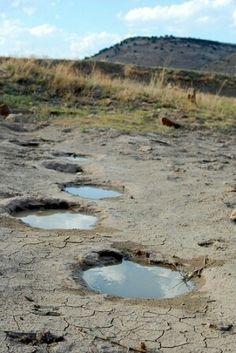 Dinosaur footprints at Black Mesa State Park near Kenton OK.