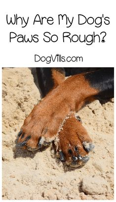 """Wondering """"Why are my dog's paws so rough?"""" The answer may surprise you, or at the very least, reassure you! Check it out!"""
