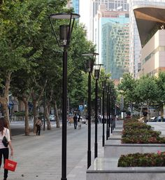 Platanus × acerifolia - Streets to escape from the hot Shanghai Summer sun