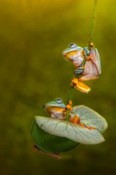 Let's Swing Together My Friend by Ellena Susanti