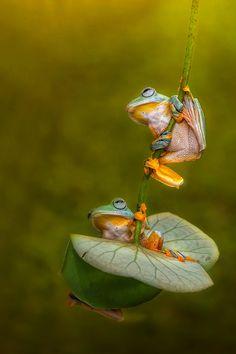 Let's Swing Together My Friend by Ellena Susanti