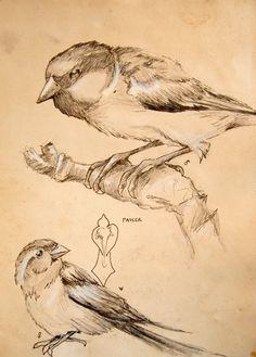 Bird Sketches. Posted by Eliska Anna Kozik. 2008  www.lizkozikart.wordpress.com