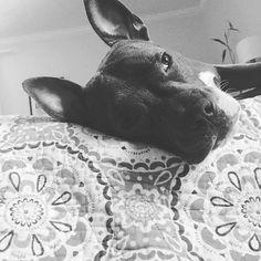 This is Pitbull Life See More at fb.me/pitloversclub #pitbull #pitbullsofinstagram #pitbulls #pitbulllove #pitbulladvocate #pitbulllife #pitbullsofig #pitbullpuppy #pitbullmom #pitbullmix #pitbullsofficial #pitbullpride #pitbullinstagram #pitbulllover #pitbulllovers #pitbullnation #pitbullgram_ #pitbullterrier #pitbullgram #pitbullfriends #pitbullsarelove #pitbullrescue #pitbullvixens #pitbullove #pitbullproblems #pitbullfamily #pitbullmommy #pitbullsofinsta #pitbullsrule #pitbulllovers…