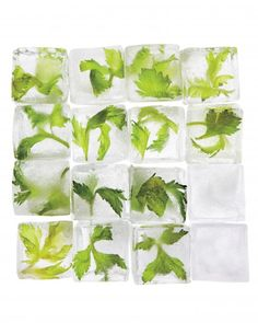 Celery ice cubes - or use any herb to make a summer drink more fun.