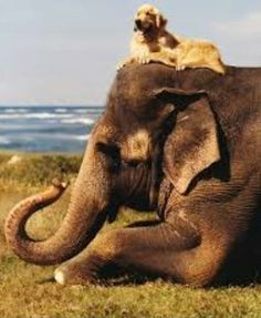 I recenty enjoyed an elephant safari in Nepal..It was a part of my grand vision --to see the world. Most empowering. Donna Fries