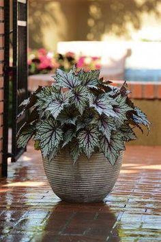 10 Best Shade Loving Plants - Good Plants That Grow in Shade plants Potted Plants For Shade, Shade Plants Container, Best Plants For Shade, Potted Plants Patio, Shade Garden Plants, Garden Shrubs, Landscaping Plants, Cool Plants, Outdoor Plants