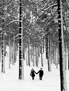 Taking a walk in the early morning hours in the snow. Now we just need some snow this winter.