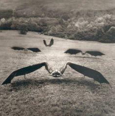 #bats, #bat, #dark animals