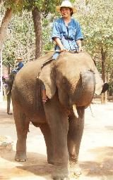 "Khankluay is a male elephant at the Lampang elephant camp.  He is 11 years old.  He is named after a famous elephant of King Naresuan who freed Thailand from Burmese rule.  His name also means ""Banana Tree Branch."""