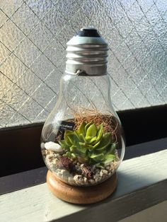Hanging Light Bulbs, Light Bulb Art, Light Bulb Crafts, Light Bulb Terrarium, Small Terrarium, Terrarium Diy, Plants In Bottles, Succulents In Containers, Plant In Glass