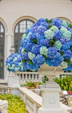 Gorgeous blue hydrangea arrangements in urns by Michelle Rago Ltd. I love blue hydrangeas.