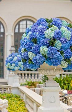 Gorgeous blue hydrangea arrangements in urns by Michelle Rago Ltd. I love blue hydrangeas.