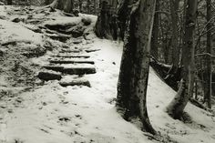 #stairways in the #woods - bwstock