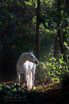 Beautiful horse in a lovely wood.