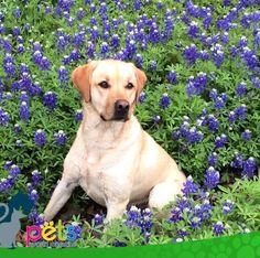 Buenos días 🌞  #PetsWorldMagazine #RevistaDeMascotas #Panama #Mascotas #MascotasPanama #MascotasPty #PetsMagazine #MascotasAdorables #Perros #PerrosPty #PerrosPanama #Pets #PetsLovers #Dogs #DogLovers #DogOfTheDay #PicOfTheDay #Cute #SuperTiernos