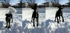 The evolution of catching a snowball