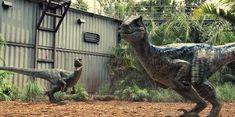 velociraptor wallpaper - Google Search