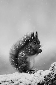 squirrel covered in snow