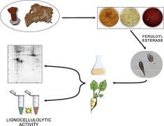 #JoP: Secreted protein extract analyses present the plant pathogen Alternaria alternata as a suitable industrial enzyme toolbox