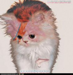 Kittens Take Over Classic Rock Album Covers