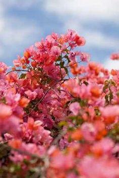 Cuadro Spring Blossoms II