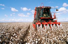 cotton fields remind me being in the Arkansas Delta International Tractors, International Harvester, Southern Accents, Motivational Photos, Cotton Fields, Victory Garden, New Farm, Agriculture, Farming