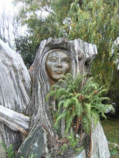 Tree carving of a Maori lady, Nelson area, NZ