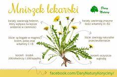 Cantaloupe, Herbs, Fruit, Food, Places, Essen, Herb, Meals, Yemek