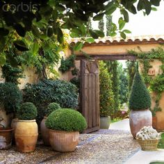 Mallorcan villa - lovely even without flowers