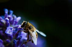 dolgos méhek