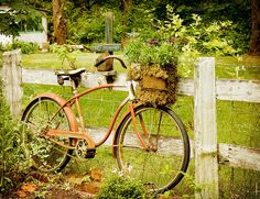 I have my brother's old bike; it's the bike I learned to ride on!!  For years, It lived beside our front porch steps and always had some flowers in the basket!!