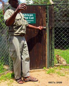 South Africa trip journal: Cat friends, big and small, at Emdoneni Cat Rehabilitation Centre Trip Journal, Kwazulu Natal, My World, Caravan, South Africa, Centre, African, Friends, Cats