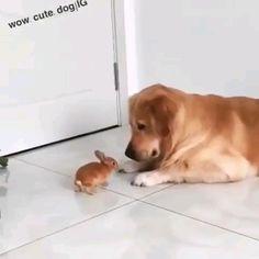 Hello my new friend 😍😍 - Tiere - Perros Cute Funny Animals, Cute Baby Animals, Animals And Pets, Cute Animal Videos, Cute Animal Pictures, Cute Puppies, Cute Dogs, Tier Fotos, Cute Bunny