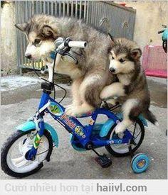 Hai chú chó chở nhau đến quán thịt cầy ~ Hài Thôi Zồi  Tổng Hợp Ảnh Video Vui ảnh chế video hài hước xả stress