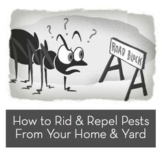 great ideas for repelling insects (basil repels mosquitos! Garden Bugs, Garden Pests, Plant Pests, Bug Off, National Geographic Kids, Garden Guide, Cleaners Homemade, Insect Repellent, Science Experiments