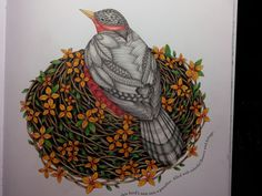 Millie Marotta Tropical World bird