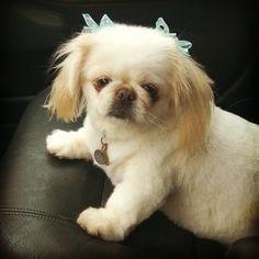 Kaytee after visiting the groomer.
