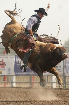 Attend bull riding event