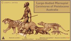 Illustration of Carnivores of Pleistocene Australia - by Joseph J. Ortega