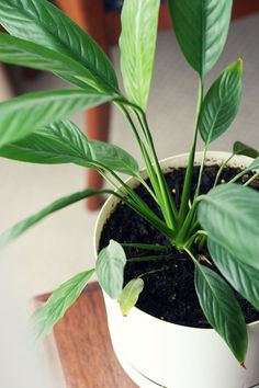 winter indoor plant care
