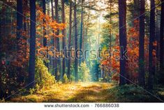 Find Autumn Forest Nature Vivid Morning Colorful stock images in HD and millions of other royalty-free stock photos, illustrations and vectors in the Shutterstock collection. Thousands of new, high-quality pictures added every day. Nature Images, Nature Pictures, Luz Solar, Mystical Forest, Autumn Forest, Autumn Nature, Background For Photography, Nature Scenes, Photo Studio
