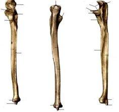 Arquivo Anatomia (apostila completa).doc enviado por Eugênio  no curso de Fisioterapia na UNINORTE. Sobre: Musculos, articulações, ossos e ligamentos, apostila completa